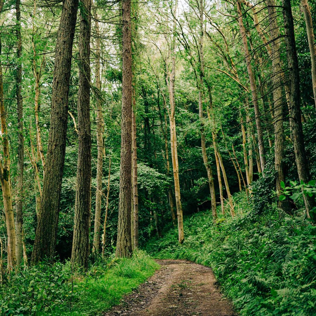 Road to Logie Farm through trees